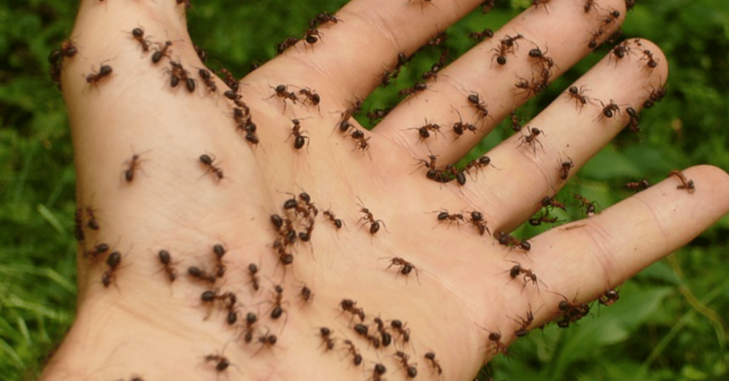 ants crawling on a person's hand