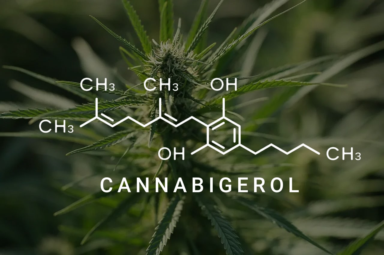 CBG 101: Your Complete Guide to Cannabigerol | fabuleaf