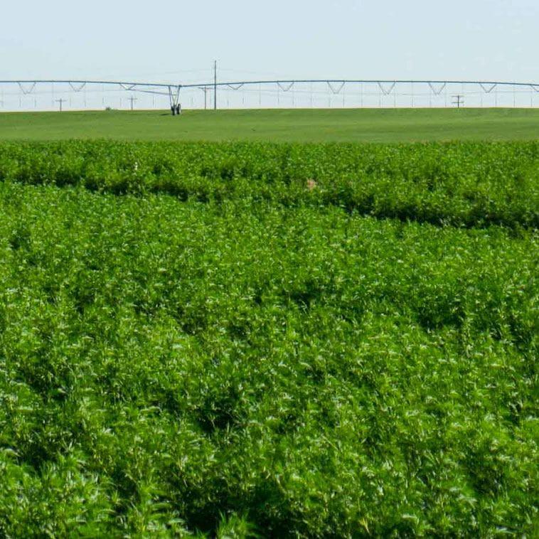fabuleaf™'s CBD is made from a single 1,000 acre Colorado Farm | fabuleaf™'Full Spectrum Hemp Flower CBD Products