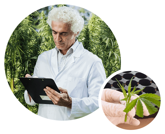 Scientist reviewing seed genetics of fabuleaf™'s Full Spectrum Hemp Flower CBD Products | The Farm