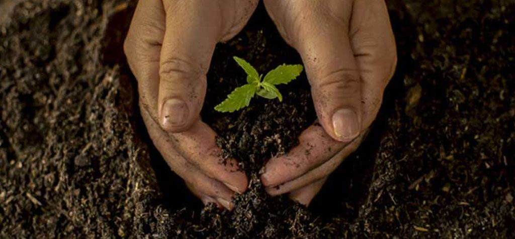 Hand harvested hemp | Is how my CBD harvested important? from fabuleaf™ full spectrum hemp flower cbd products