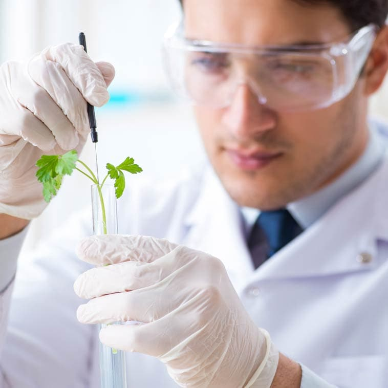 Scientist Testing Plant | The Science of Fabuleaf CBD Products