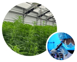 fabulaef™ offers full transparency and third party testing documentation for our full line of Full Spectrum Hemp Flower CBD Products | fabuleaf™ CBD Products are Hand Harvested, Cruelty, Pesticide, Herbicide and GMO free.